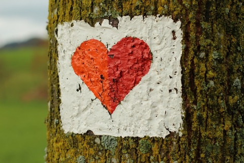 heart-symbol-red-luck-feelings-tree-bark-moss