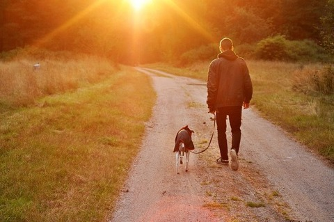 sunset-dog-owner-man-nature-sweden