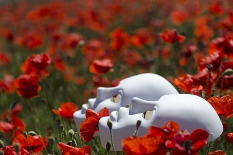 mask-poppies-field-red-nature-poppy-flower