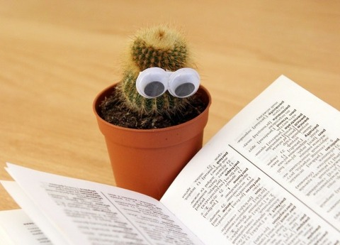 potted-plant-with-artificial-eyes-and-book-on-desk